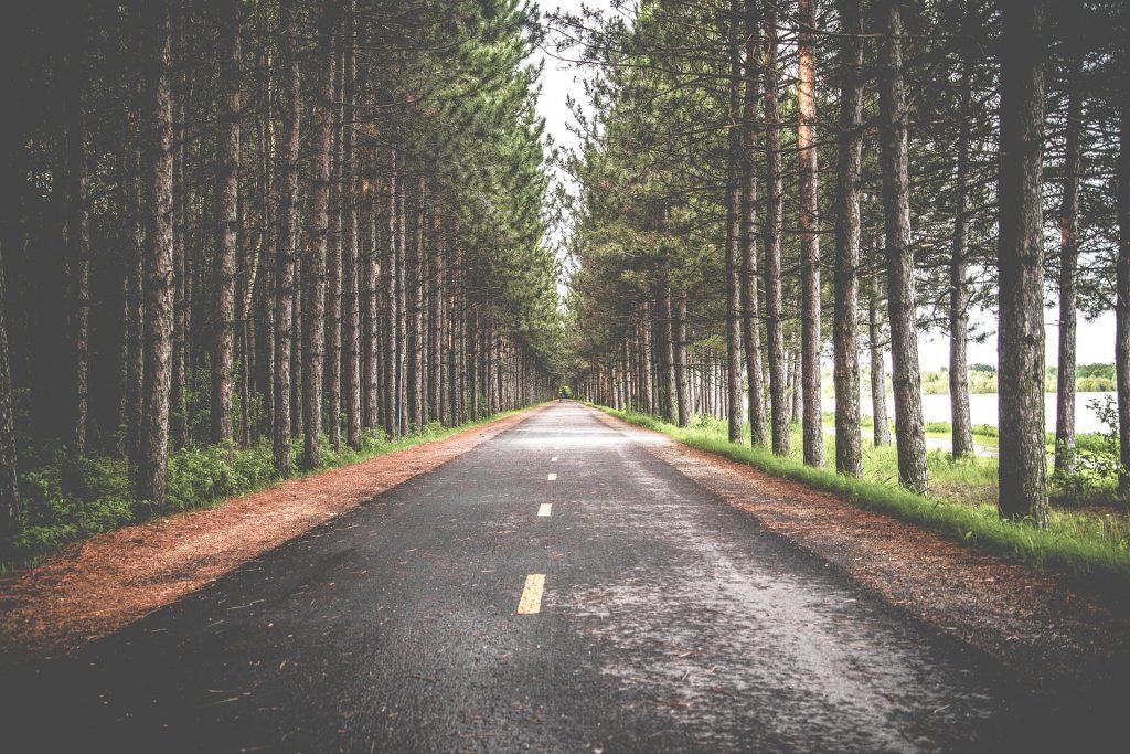 En väg med träd längs sidorna.